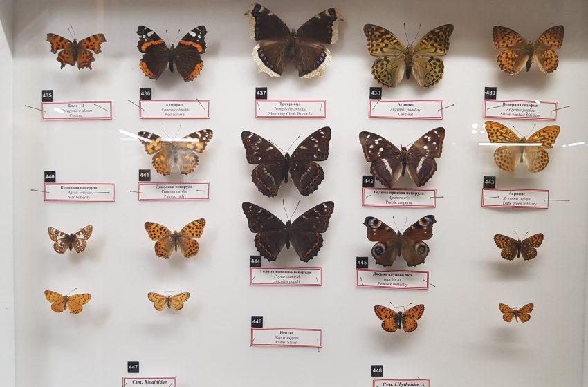 Конкурс – Фестивал на пеперудите – Природонаучен музей Пловдив